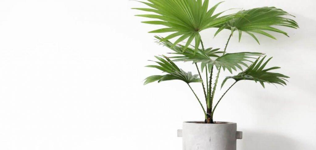 amenagement coiffeuse chambre plante